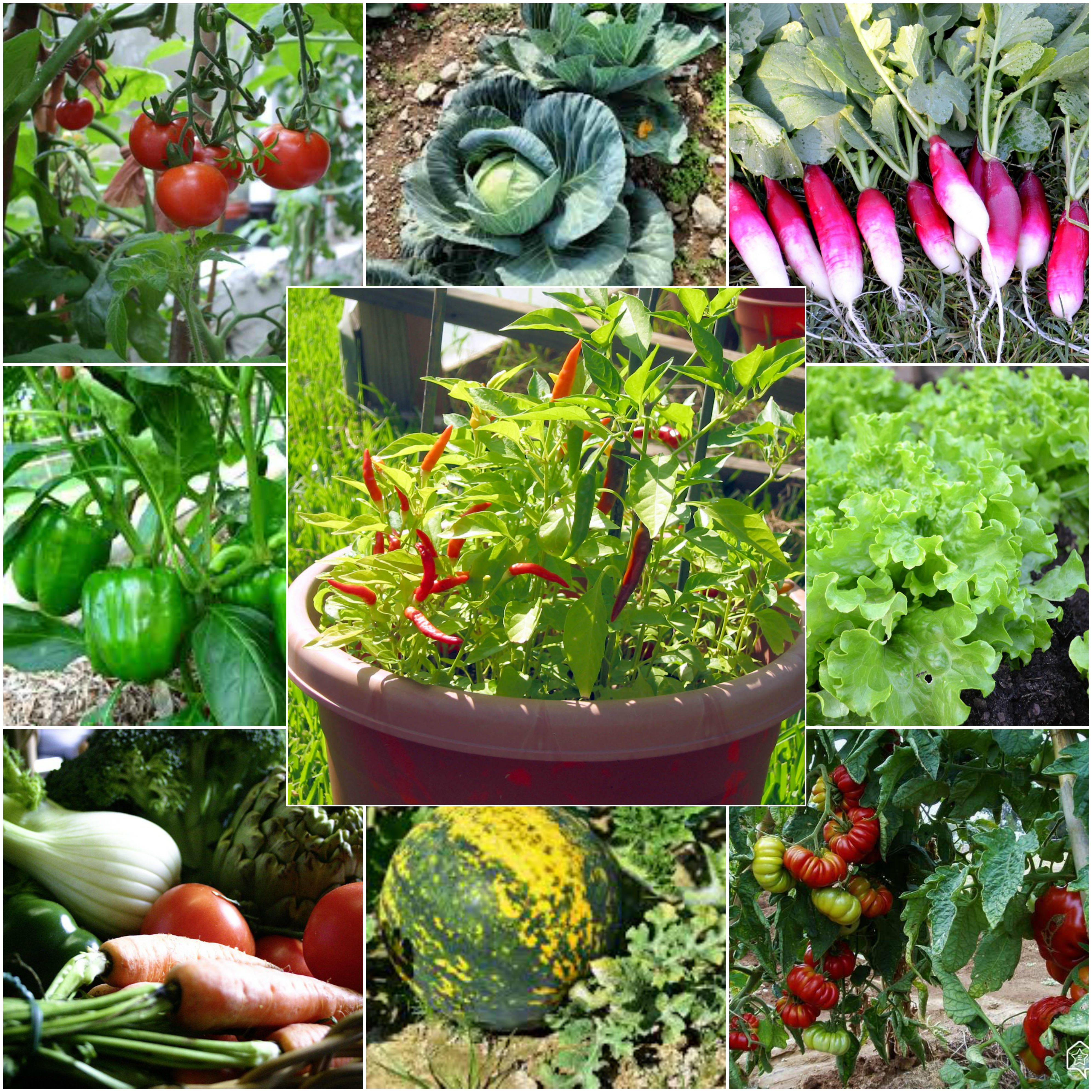 Gardening Ideas Showing Fresh Fruits Herbs And Vegetables